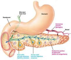 Pengobatan Diabetes Mellitus